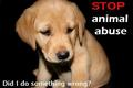 Stop Animal Abuse - against-animal-cruelty photo