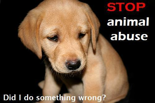 Against Animal Cruelty! wallpaper possibly containing a golden retriever and a labrador retriever entitled Stop Animal Abuse