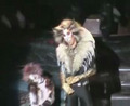 Cats Musical Boston