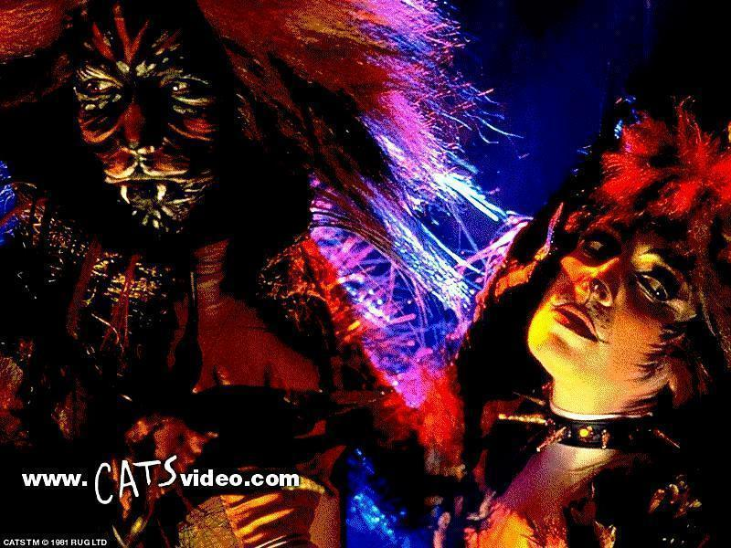 musical wallpapers. Cats Musical wall papers