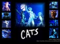 Cats Musical wall papers