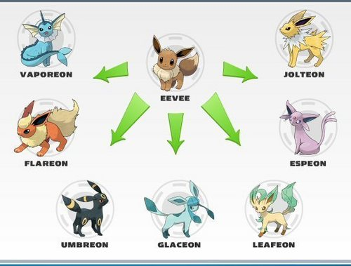 Eevee Evolutions Clan fondo de pantalla called Eevee Evolutions Charts