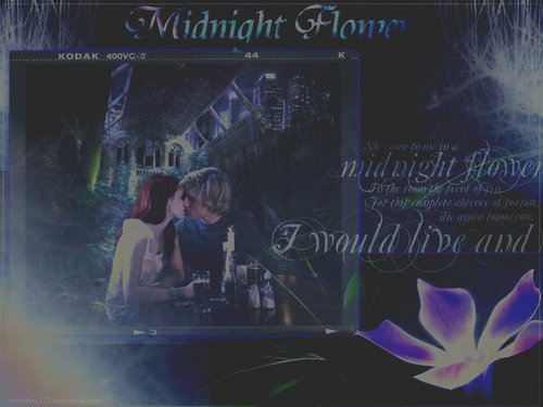 Mortal Instruments wallpaper possibly with a sign and a concert entitled Midnight Flower