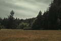 Not shooting in this location now. But its really nice here.  (eclipse location) =) - twilight-series photo