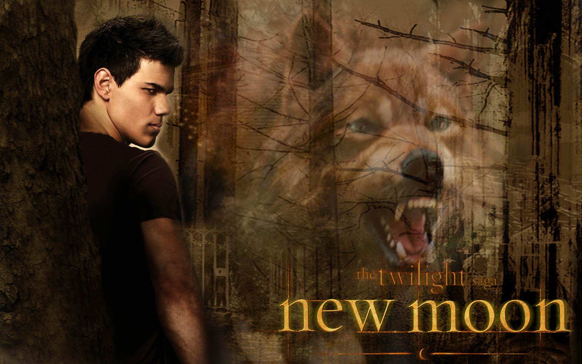 This Is Who I Am: Review : New Moon