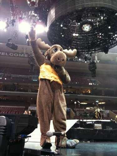jb as a moose