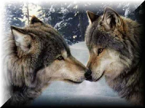 wolves can kiss too!