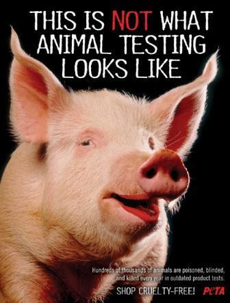 animali are not ours for experiments