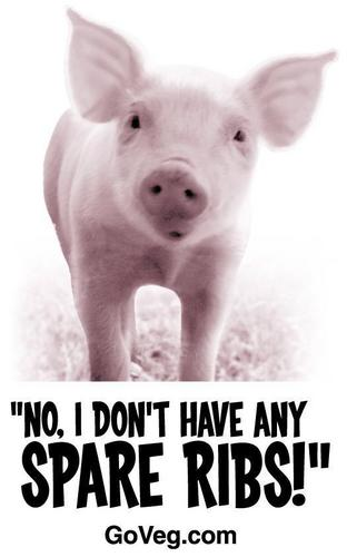 animali are not ours to eat