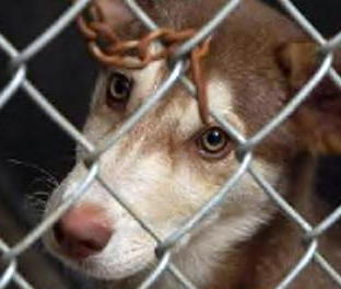 Against Animal Cruelty! wallpaper containing a chainlink fence titled How can you hurt him????