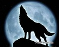 Jacob Black. Wolf and Human :)