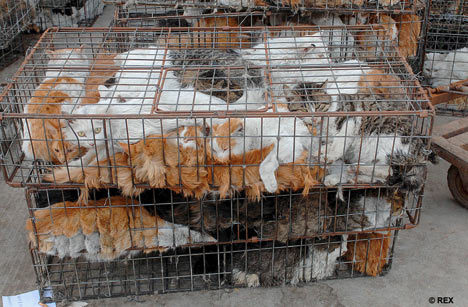 Against Animal Cruelty! wallpaper with a chainlink fence called Look at these pained faces, how could anyone do this????