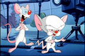 Pinky & the Brain - pinky-and-the-brain photo