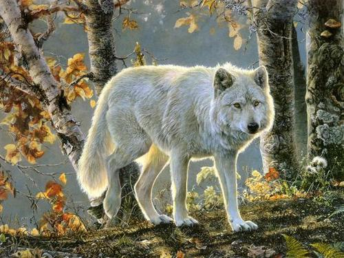 serigala, wolf in the fall!