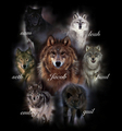 wolf packs - vampires-vs-werewolf photo