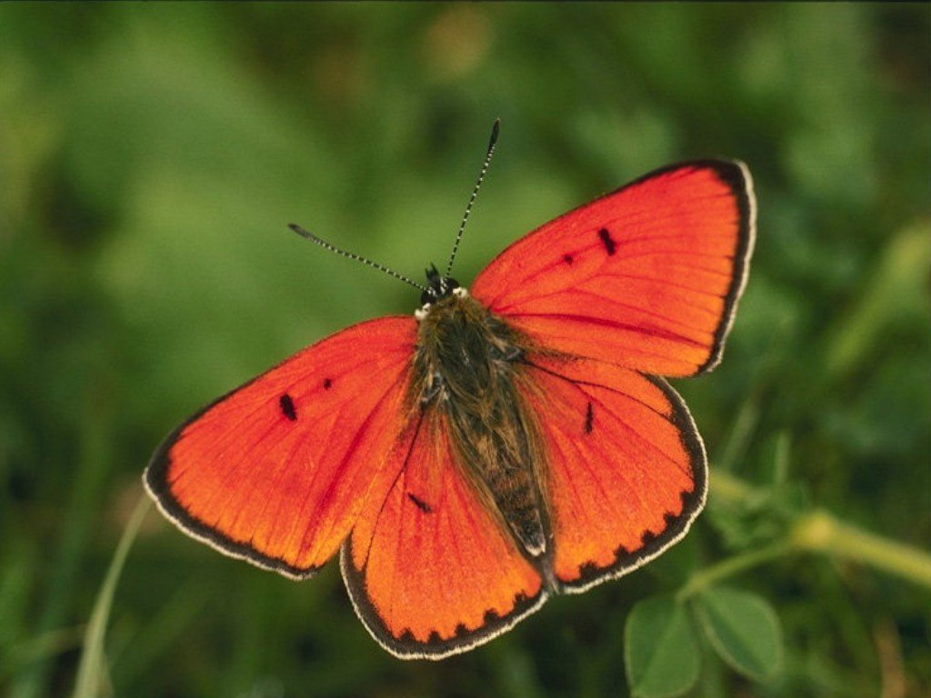 Butterflies images Butterfly Wallpaper HD wallpaper and background