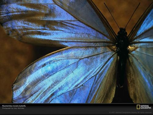 Butterfly Wallpaper - butterflies Wallpaper
