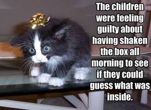 Funny 動物