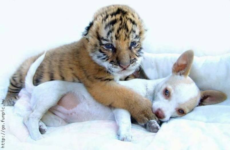 Domestic Animals Funny Animals