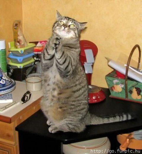 funny pics of animals. Funny Animals - Domestic