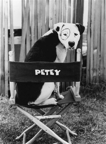 Little Rascals- Petey - pitbulls photo