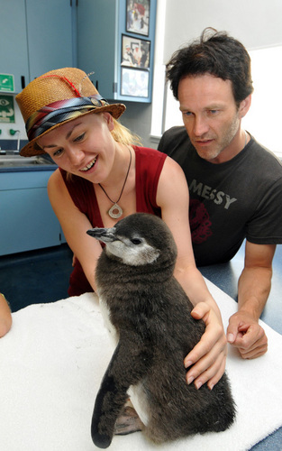 Stephen Moyer and Anna Paquin at Sea World