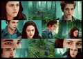 Twilight Picspam - twilight-obsessors fan art