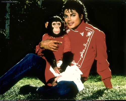 Collection MJ-Story : Michael et les animaux ^^ - Page 6 Various-Photoshoots-Sam-Emerson-Photoshoots-michael-jackson-7440684-500-400