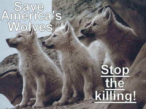 save the alasken Serigala