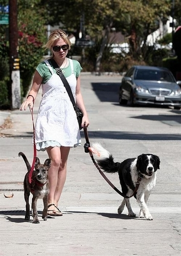 Anna walking her dogs