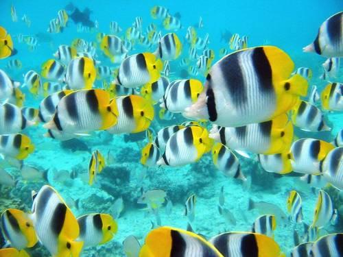 Sea Life wolpeyper entitled Marine Life