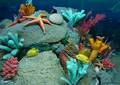 Marine Life - sea-life photo