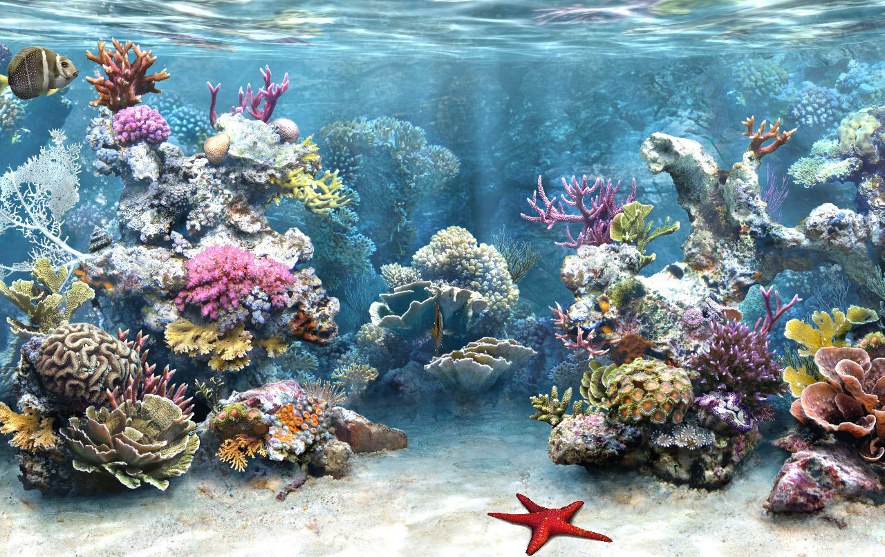 what is marine life The census of marine life was an international project spanning 10 years that recorded the diversity, distribution, and abundance of life in the ocean.