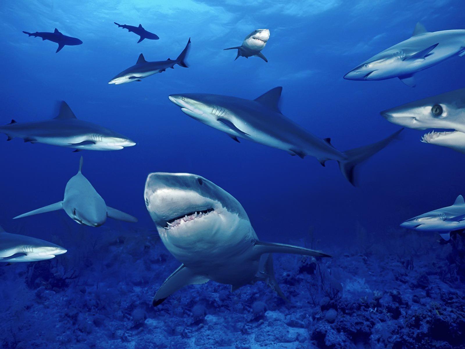 Marine Life - Sea Life Wallpaper (7591175) - Fanpop