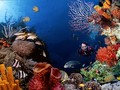 Marine Life - sea-life wallpaper