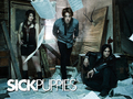 Sick Puppies - sick-puppies wallpaper
