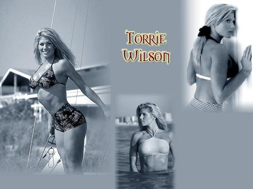 Torrie Wilson Hintergrund containing a bikini and a badeanzug called Torrie Wilson