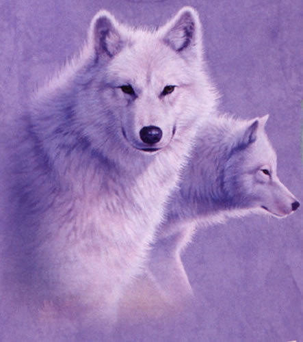 Graceful White lobos