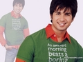 shahids wallpaper - shahid-kapoor wallpaper