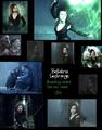 Bellatrix Lestrange - bellatrix-lestrange photo
