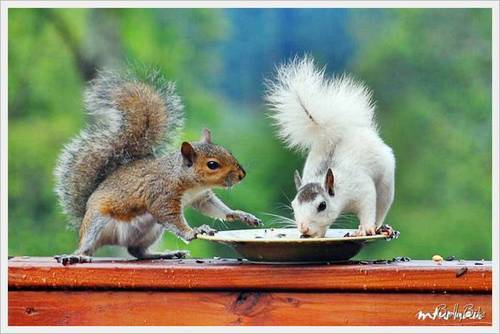 Wild Animals wallpaper containing an eastern grey squirrel and a squirrel titled Cute Squirrels