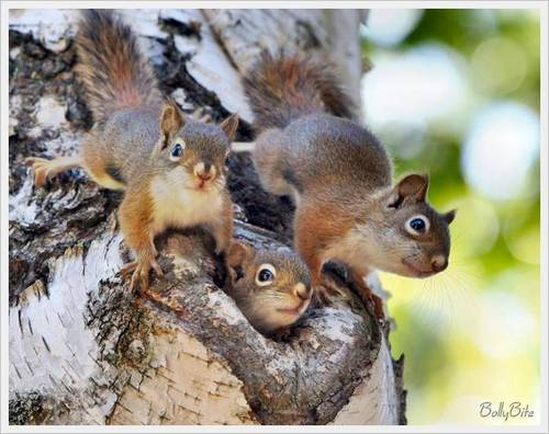 Cute Squirrels