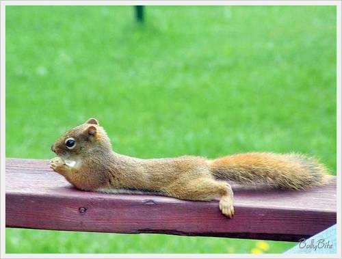 Wild Animals wallpaper entitled Cute Squirrels