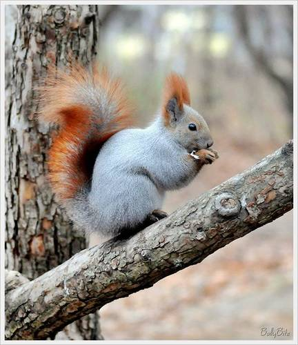 Wild Animals images Cute Squirrels HD wallpaper and ...