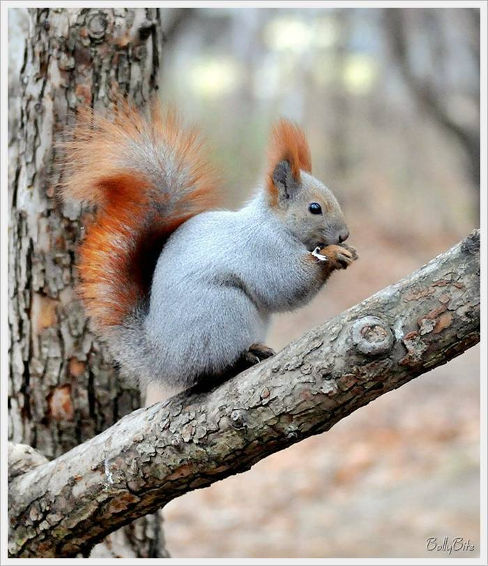wild animals images cute squirrels hd wallpaper and