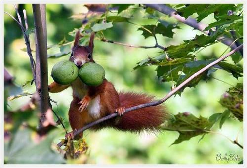 Cute Squirrels  - wild-animals Photo