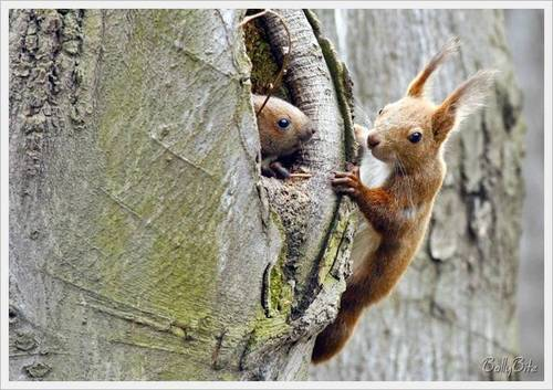 Wild Animals wallpaper titled Cute Squirrels