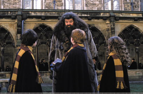 Hogwarts Professors wallpaper probably with a fur coat and a street called Hagrid and the Trio