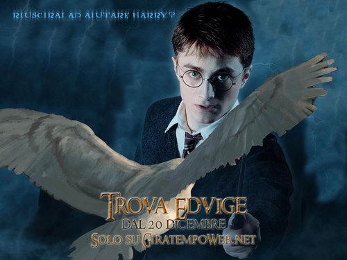 哈利·波特