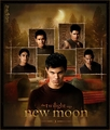 New Moon Wolf - twilight-series photo